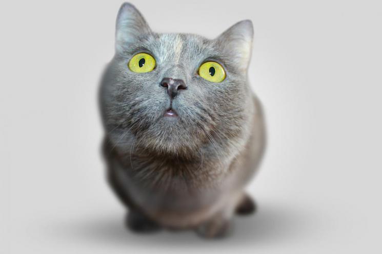 cat-351926_1280.jpg